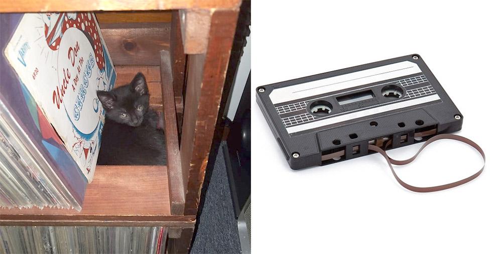 Cassie Cassette